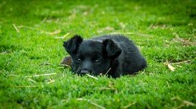 小的狗 库存照片