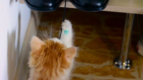 小的猫使用与人` s鞋子 影视素材