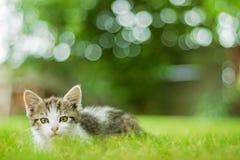 小的猫在草坐 库存图片