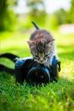 小的猫,室外 免版税库存图片