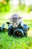 小的猫,室外 免版税库存照片