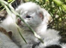 小的猫 免版税库存照片