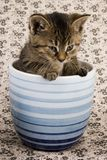 小的猫 库存照片