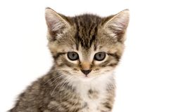 小的猫 库存图片