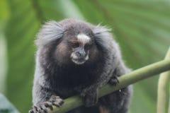 小的猴子在森林 库存照片