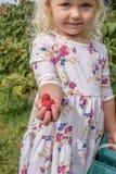 小的白肤金发的女孩采摘莓 免版税库存照片