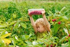 小的白肤金发的男孩采摘莓在庭院里 库存照片