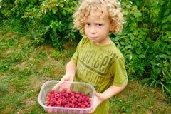 小的白肤金发的男孩采摘莓在庭院里 图库摄影