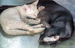 小的白色小猫逗人喜爱的拥抱妈妈猫 库存照片