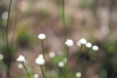 小的白色扫的草在围场 免版税库存照片