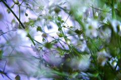 小的白花 库存图片