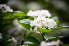 小的白花 免版税图库摄影
