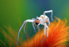 小的空白蜘蛛 免版税库存照片
