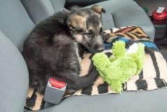 小的等待在汽车的小狗和他的宠物 库存照片
