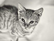小的红色小猫 图库摄影