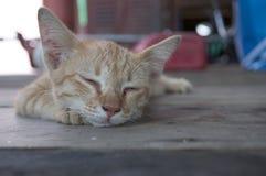 小的红色小猫 免版税库存照片