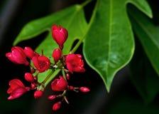 小的红色花在庭院里 库存照片