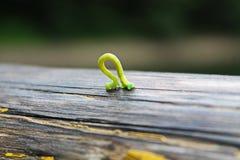 小的绿色毛虫 免版税库存照片