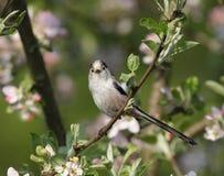 小的美丽的鸟在庭院里 免版税库存照片