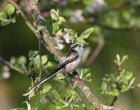 小的美丽的鸟在庭院里 免版税库存图片
