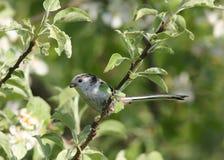 小的美丽的鸟在庭院里 库存图片