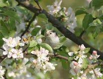 小的美丽的鸟在庭院里 图库摄影