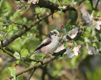 小的美丽的鸟在庭院里 库存照片