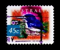 小的翠鸟Ceyx pusilla,植物群动物区系serie,大约1997年 库存图片