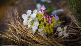 小的花花束 免版税库存图片