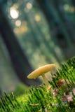 小的蘑菇在一个童话森林里 库存图片