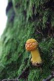 小的蘑菇 免版税图库摄影