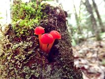小的蘑菇 免版税库存图片
