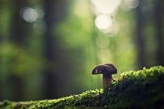 小的蘑菇 库存照片