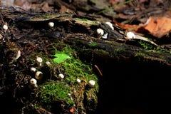 小的蘑菇 免版税库存照片