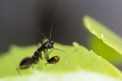 小的蚂蚱 免版税库存图片