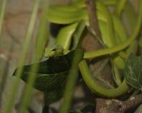 小的蛇在苏拉巴亚市 免版税图库摄影