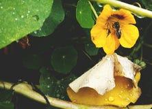 小的蜂在秋季庭院里 免版税库存图片