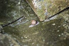 小的蜗牛 免版税库存图片