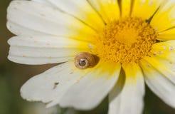 小的蜗牛 免版税图库摄影
