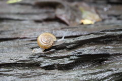 小的蜗牛 免版税库存照片