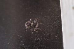小的蜘蛛宏指令 库存图片