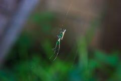 小的蜘蛛 免版税库存图片