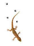 小的蜥蜴 库存图片