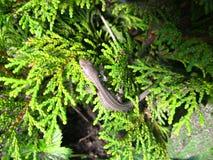 小的蜥蜴 免版税库存图片
