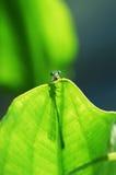 小的蜻蜓 免版税库存图片