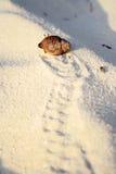 小的螃蟹 免版税图库摄影