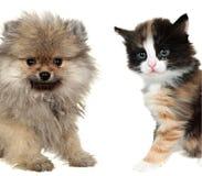小的逗人喜爱的小狗和红色混杂品种小猫 免版税库存图片