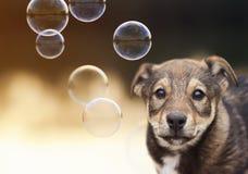 小的逗人喜爱的小狗滑稽的看看发光的肥皂Bu背景  库存图片