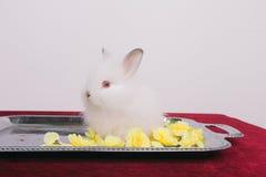 小的逗人喜爱的装饰兔子 库存图片