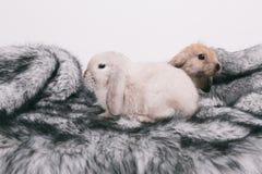 小的逗人喜爱的装饰兔子 免版税库存照片